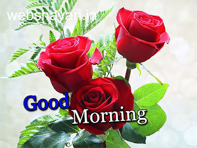 gulab good morning rose download imagesगुड मॉर्निंग गुलाब फोटो