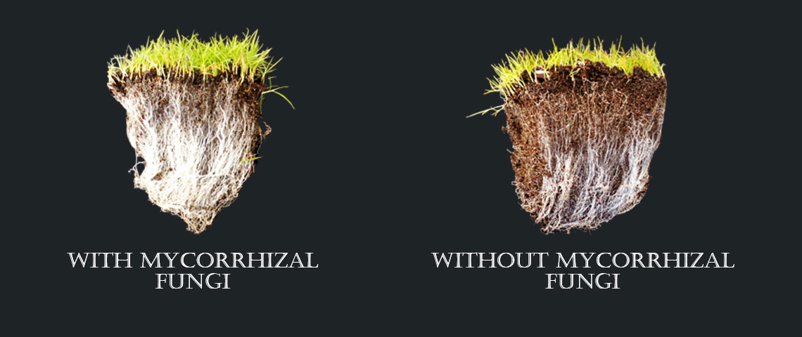 mycorrhizalfungi_header.jpg