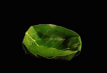 Duna (दुना) = Leaf Bowl