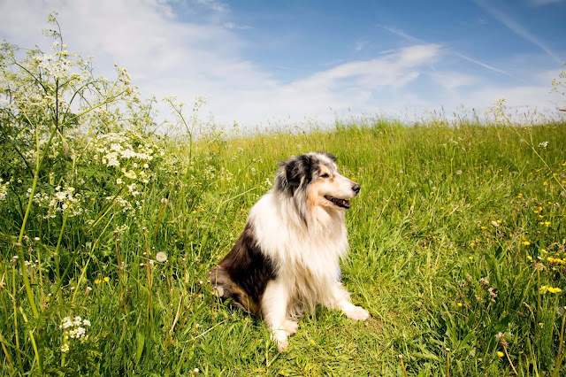 If your dog has mild constipation, home remedies are the best option as preventive measure