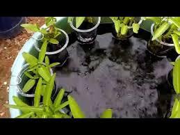 Usaha Ternak Ikan Lele Dengan Sistem Bioflok Ember ...