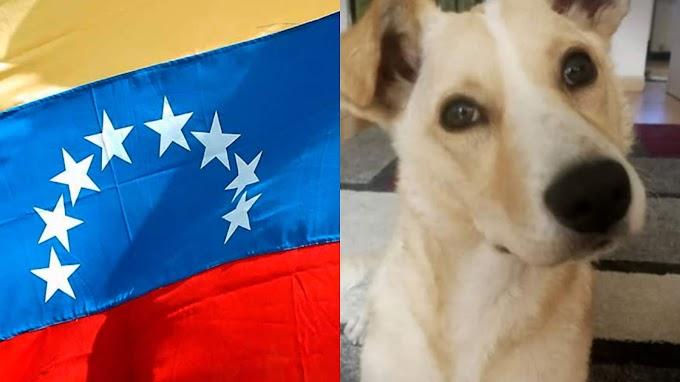 Comas: Venezolanos asaltan a mujer y se llevan a su perro [FOTO]