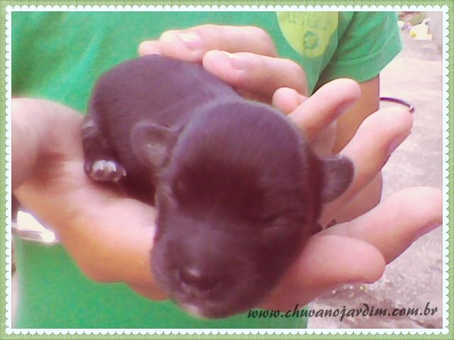 Meu Pet