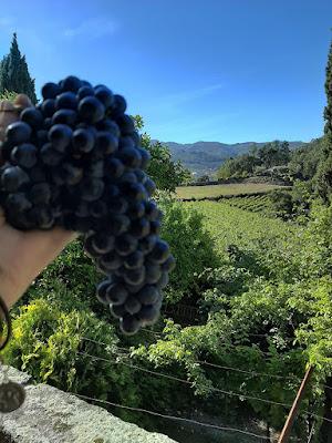 mão segurando um cacho de uva