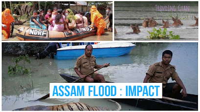 Impact of assam flood