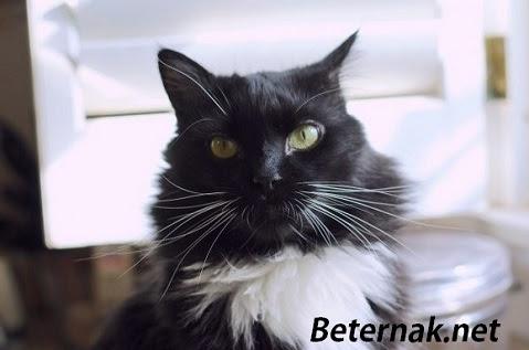 Nama Kucing Jantan Yang Bagus Lucu Dan Keren Beternak Net