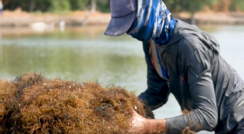 Melek Perikanan: Dasar Akuakultur Atau Aquaculture ...