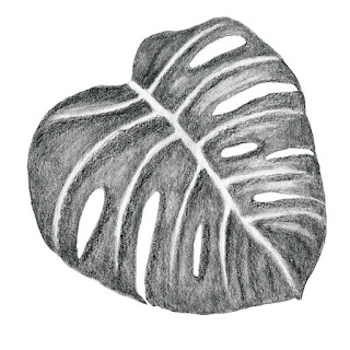 Monstera leaf pencil drawing III