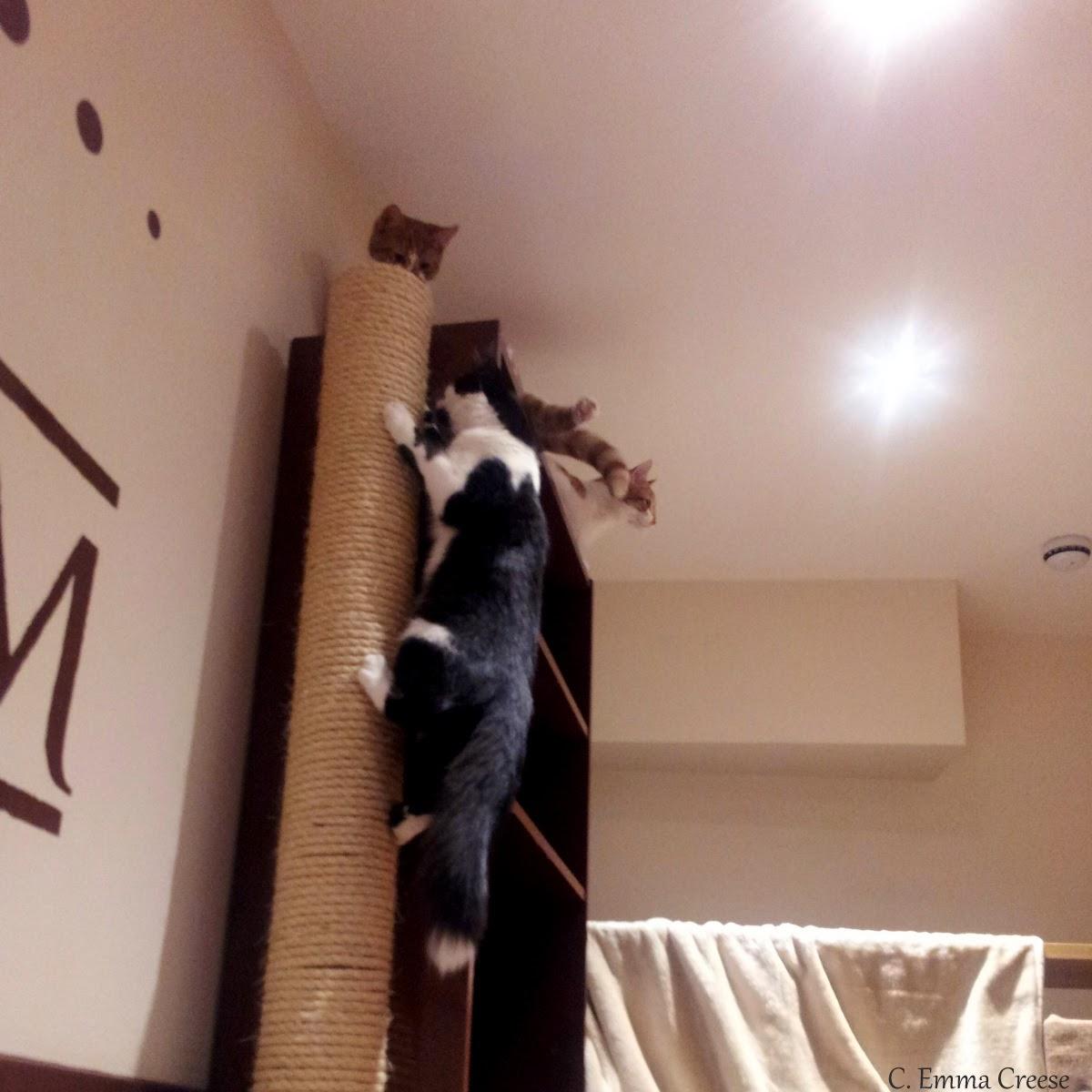 Lady Dinah S Cat Emporium Maps