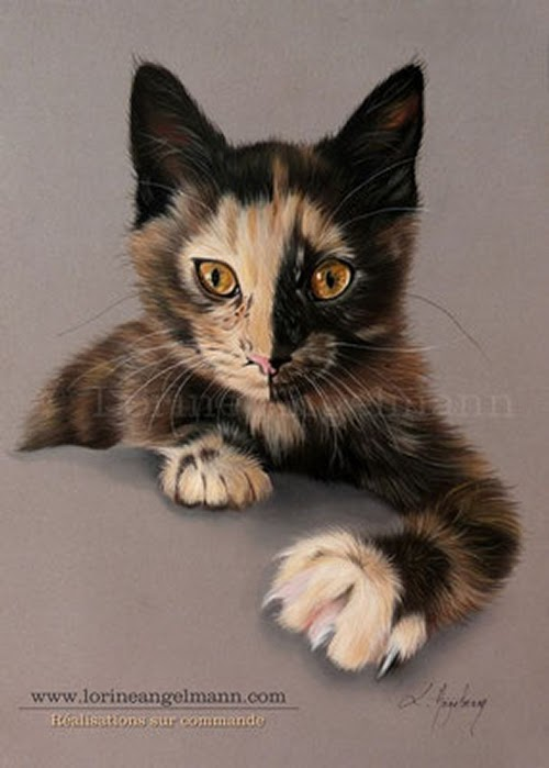 09-Tortoiseshell-Cat-Lorine-Angelmann-Cool-Realistic-Animal-Drawings-www-designstack-co