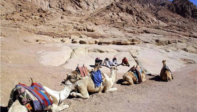 Ανακάλυψαν απολιθωμένο δεινόσαυρο στην Αίγυπτο