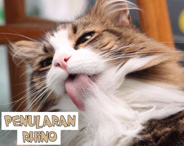 Rhino Virus pada Kucing