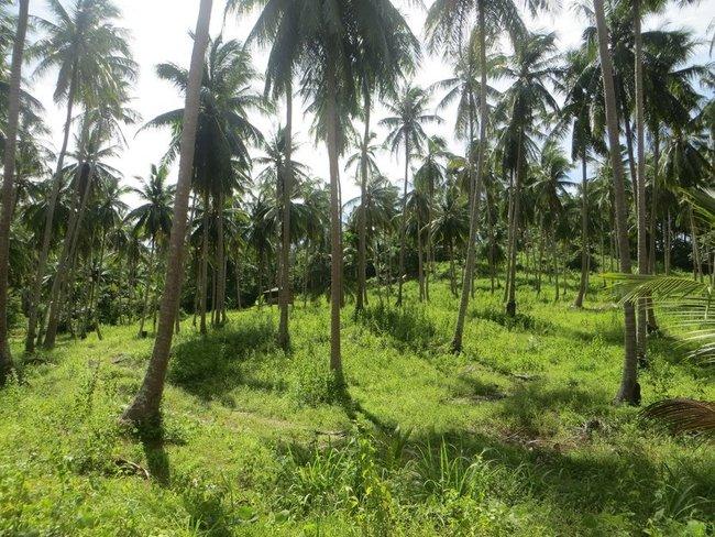 Красивая поляна с зеленой травой и пальмами