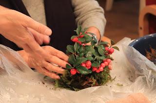 Cafeでのワークショップで大実ゴールテリアの苔玉を作っている手元の写真