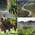 Projetos de irrigação da Codevasf em Petrolina alcançam R$ 1,4 bilhão em valor bruto de produção