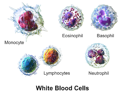 Types of cells in immune system