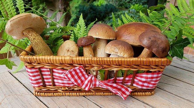 macam varian jenis jamur fungi cendawan yang bisa dimakan
