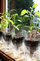reciclar botellas de plastico para plantar