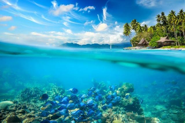 4 Perbedaan Laut Dan Samudra Yang Harus Diketahui