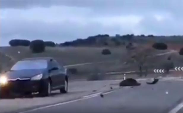 Τροχαία ατυχήματα με αγριογούρουνα video