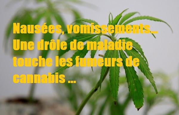 Nausées, vomissements… Une drôle de maladie touche les fumeurs de cannabis