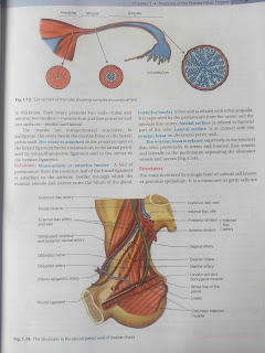 DC Dutta's textbook of Gynecology pdf download