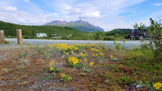 wildflowers, mountains at Tangle Lakes campground,