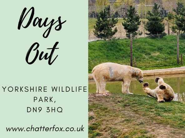 Image title reads 'days out, yorkshire wildlife park, dn9 3hq www.chatterfox.co.uk image to the right is of two polar bears playing in their enclosure at yorkshire wildlife park