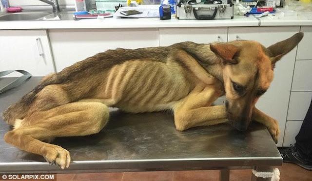 καταφύγιο διάσωση σκύλου Αδέσποτος σκύλος