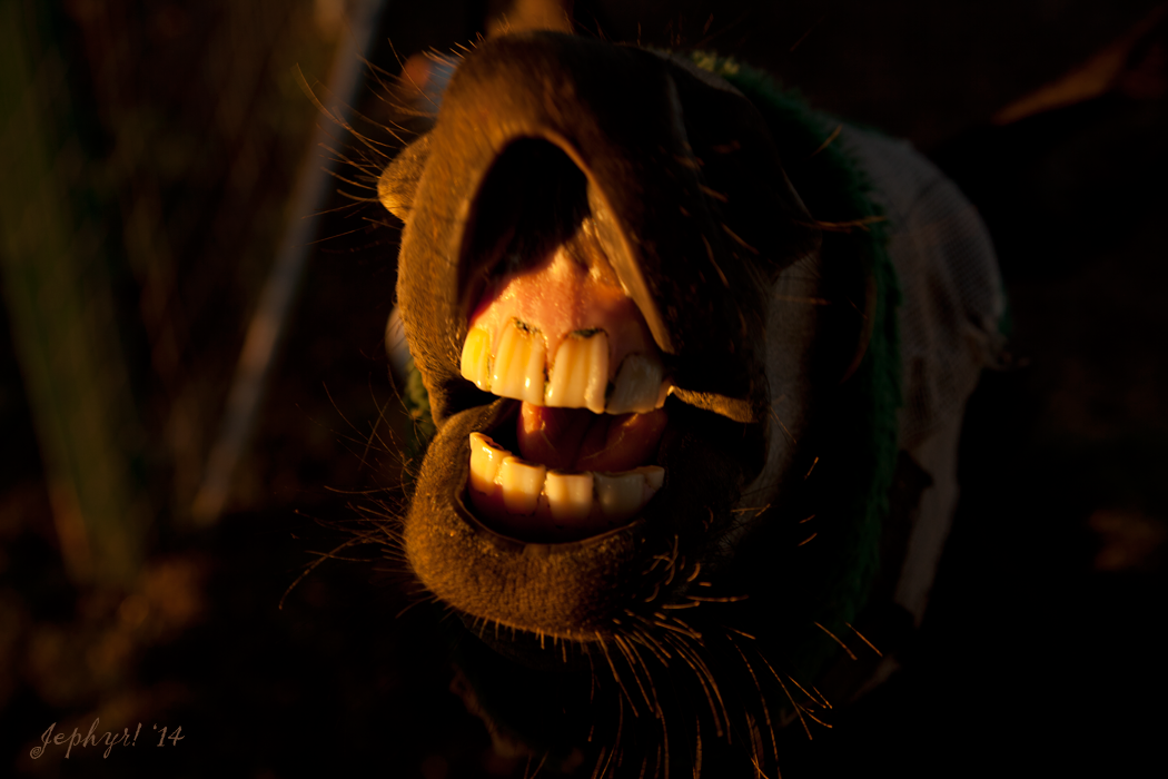 """""""FEED ME!"""" - copyright 2014, Jephyr!, All Rights Reserved"""