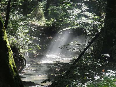 Hutan yang masih Perawan
