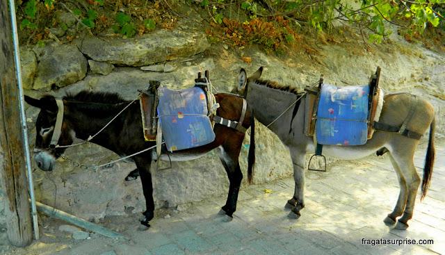 Burricos, o único meio de transporte na Vila de Lindos, na Ilha de Rodes