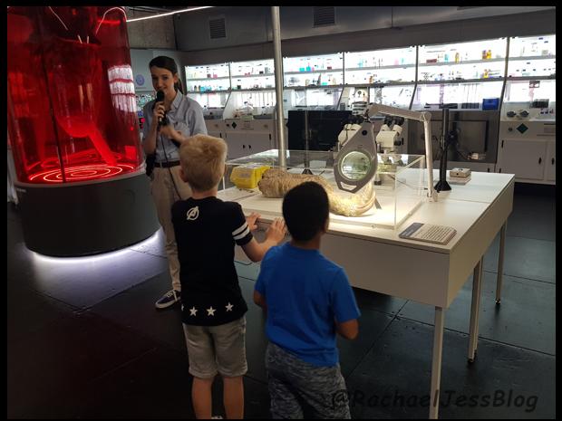 Being shown around the laboratory of the dinosaur anatomy