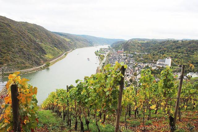 Mosel wine plantation Upper Middle Rhine Valley