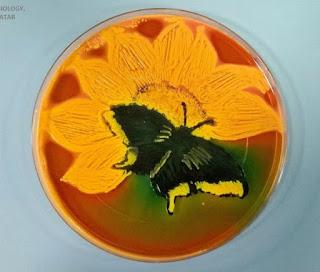 Media Agar Mikrob – Melukis Dengan Bakteri Pada Media Agar