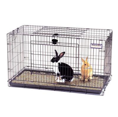 mengelap kandang kelinci