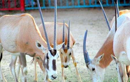 حديقة الحيوانات الطائف