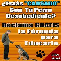 Como Educar Tu Perro