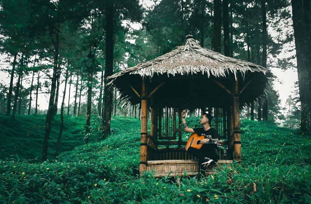 Suasana Alam Hutan Pinus Limpakuwus Banyumas