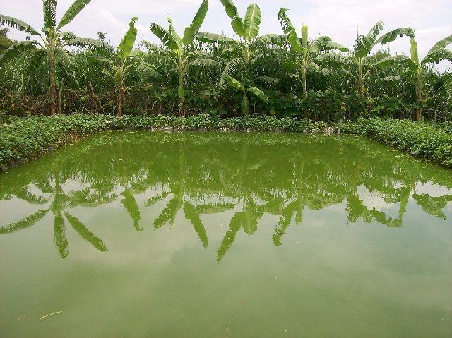 Lokasi Budidaya Ikan Patin