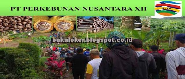 Lowongan Kerja [BUMN] PT Perkebunan Nusantara XII (Pendaftaran online)