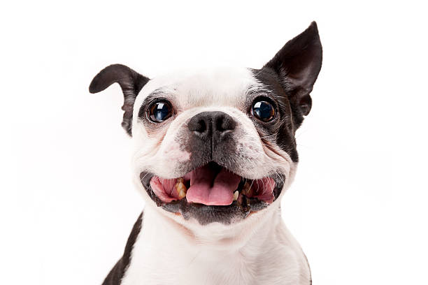 Terrier Dogs - Facts on the Breed Temperament
