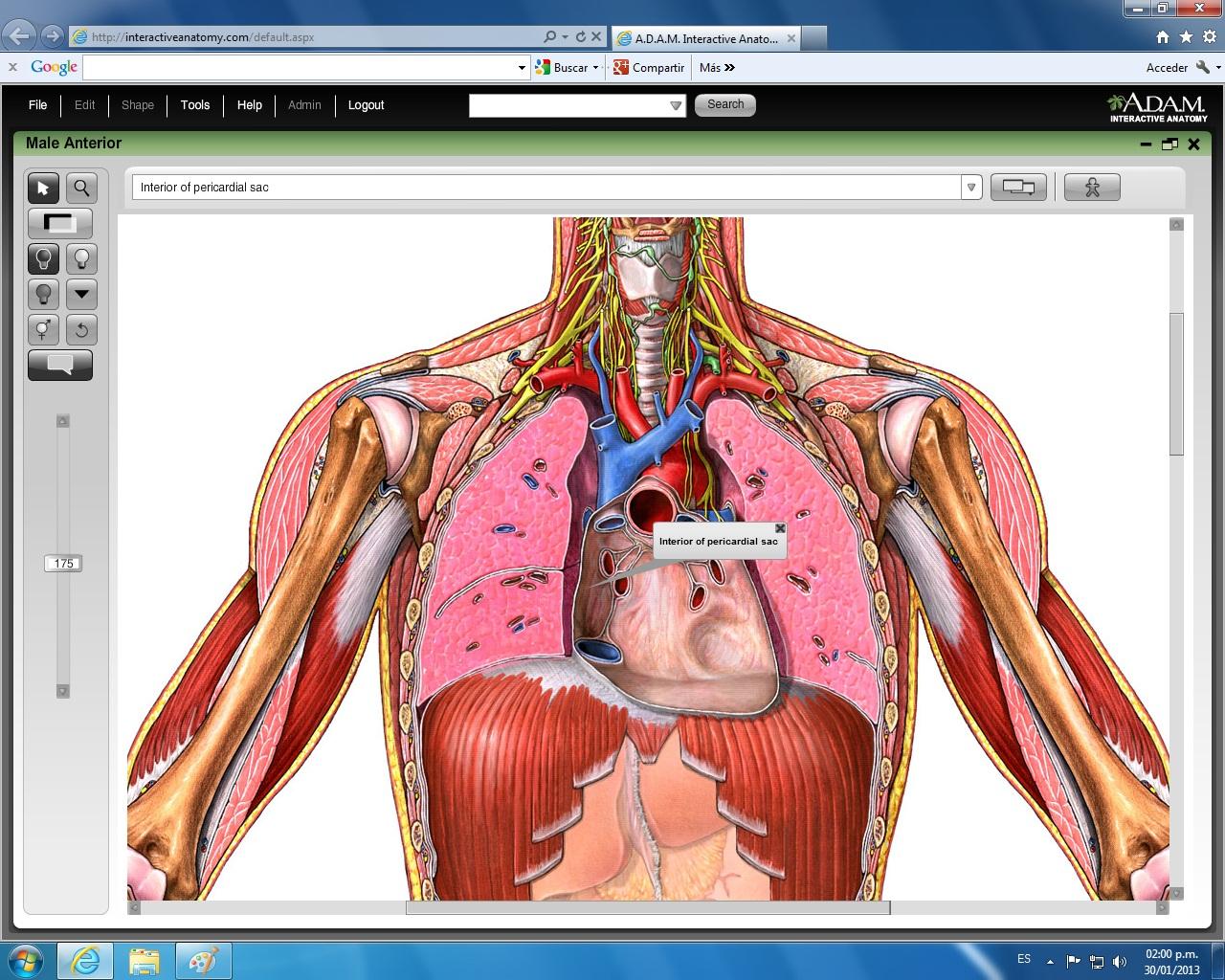 Sistemas del Cuerpo Humano: febrero 2013