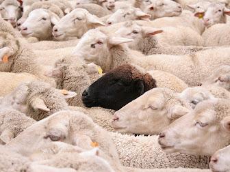 Rebaño con una oveja negra