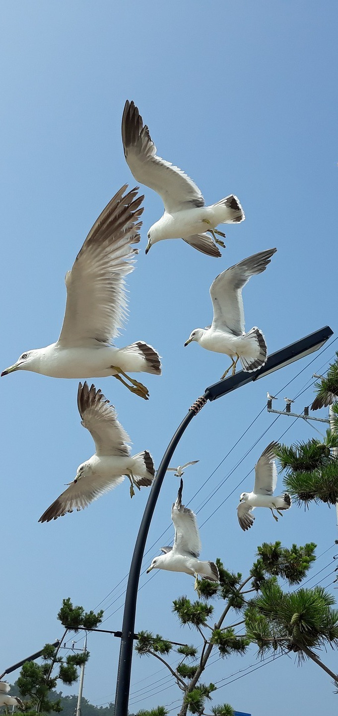 Seagulls in flight.