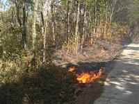 Aparat Perhutani Lengah, Areal Kawasan RPH Cijangkar Terbakar