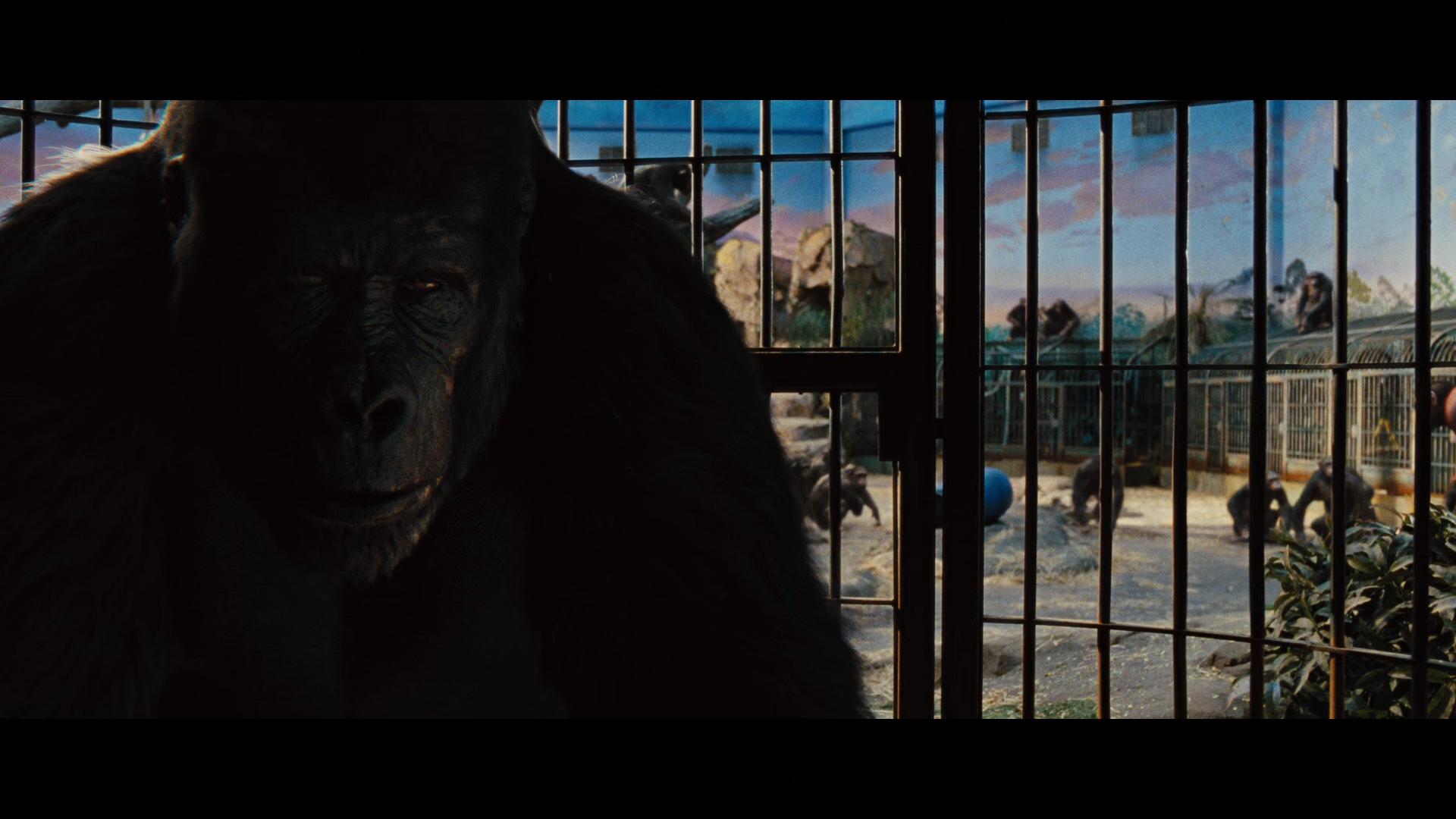 Captura de El planeta de los simios: (R)Evolución (2011) 1080p x265 HEVC Latino – Inglés