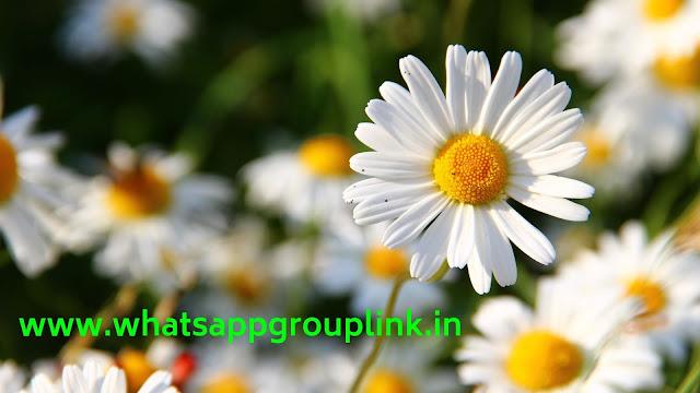www.whatsappgrouplink.in