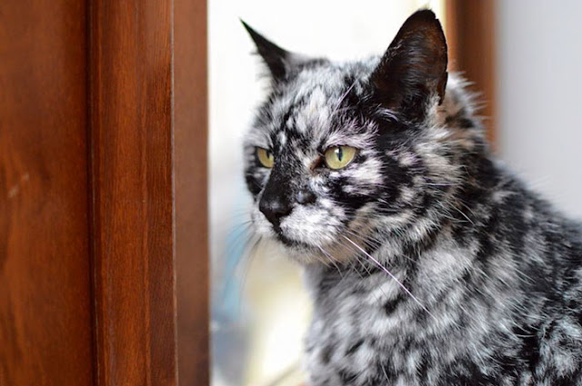 old cat, black cat, black an white cat