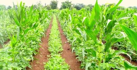 शून्य बजेट नैसर्गिक शेती (Zero Budget Natural Farming) म्हणजे नेमकं काय?